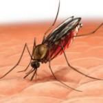 С малярией будут бороться технологией грязных носков
